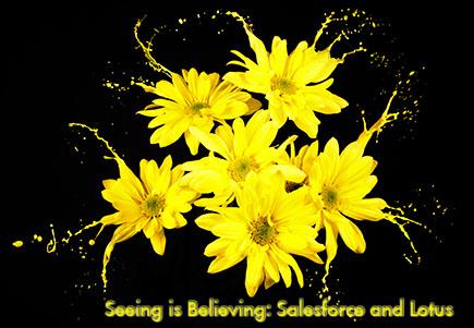 seeing is belieiving daisies