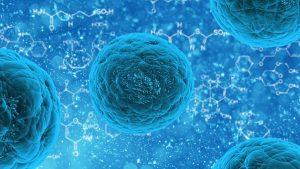 stem-cell-163711__340